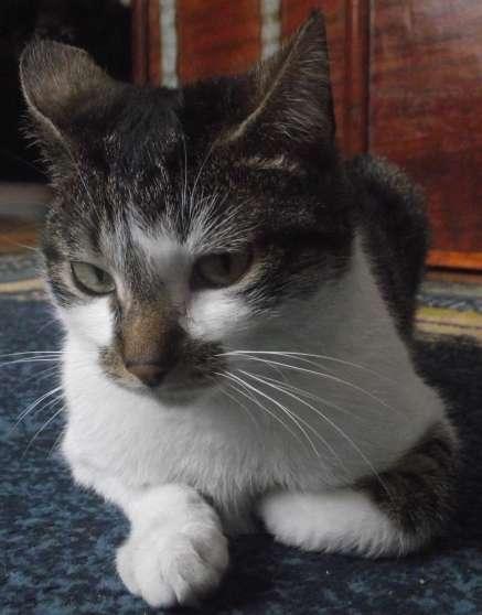 Donne jeune chatte contre bons soins