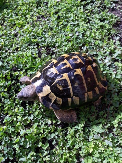 Tortue male 20 ans