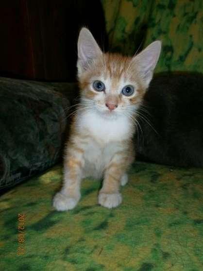 5 Magnifiques chatons Mâles à Valenciennes - Marche.fr