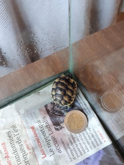 Terrarium pour tortue