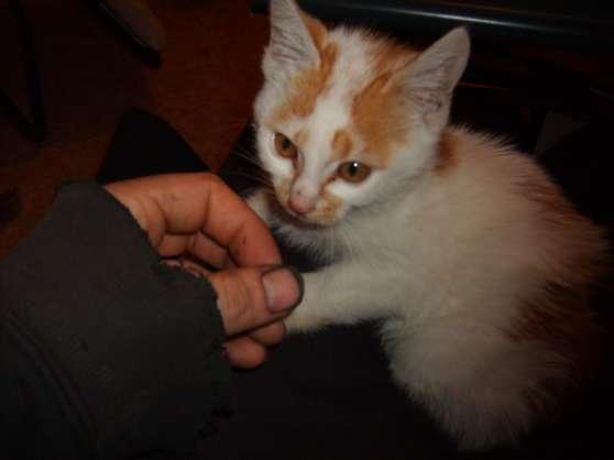 perdu de vu chat - Photo 2