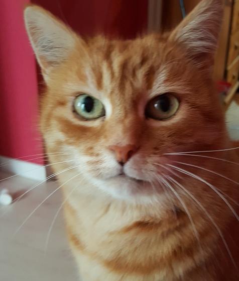 recherche chatte rousse