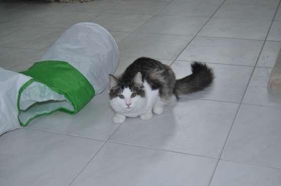 petite pension chats déclarée au Mont Va - Photo 3