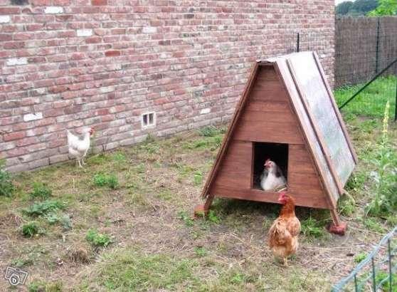 Oeufs fermier poules plein air