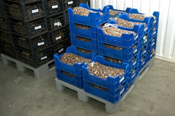 Annonce occasion, vente ou achat 'vente d\'escargots Maxima et Muller'