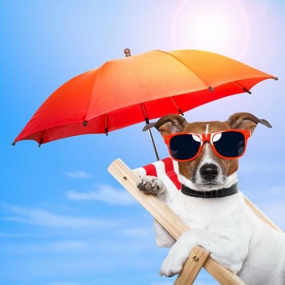 Annonce occasion, vente ou achat 'Je garde votre chien à mon domicile'