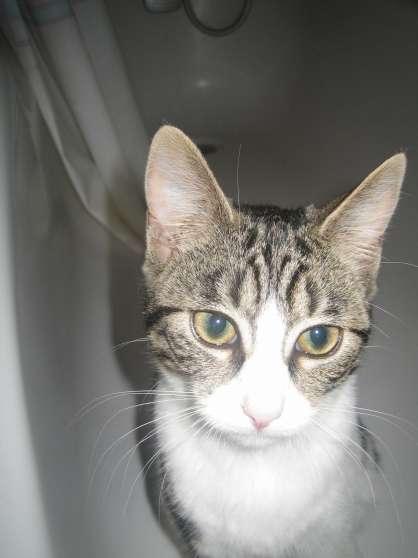 le mans chat sites Pension pour chat au mans  sites internet e-mail tél : 02 43 27 38 67   recherches associées à pension chat à le mans.