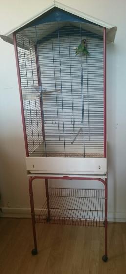 Cage et deux femelles inséparables