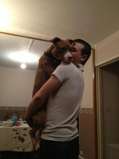 recherche garde chiens savigny sur orge animaux garde d 39 animaux savigny sur orge reference. Black Bedroom Furniture Sets. Home Design Ideas
