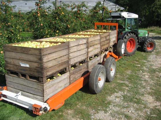 Annonce occasion, vente ou achat 'Pommes & Pommes à Jus'