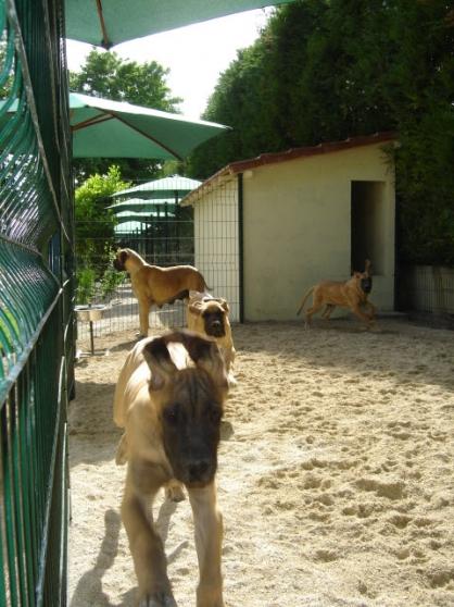Annonce occasion, vente ou achat 'Stage en élevage canin :'