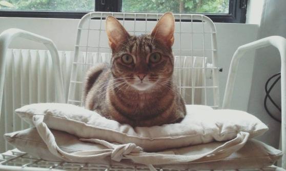 Petite Annonce : Service de visites à domicile pour chats - Des vacances, un déplacement, vous vous absentez de votre domicile et