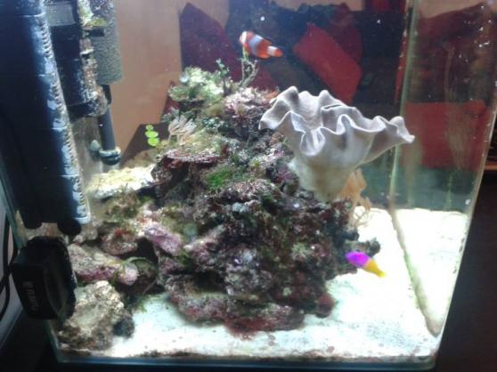 Aquarium 60L eau de mer complet + vivant