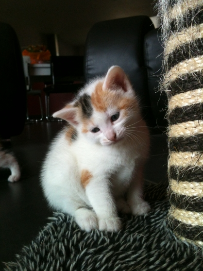 A adopter joli chaton isabelle - Marche.fr