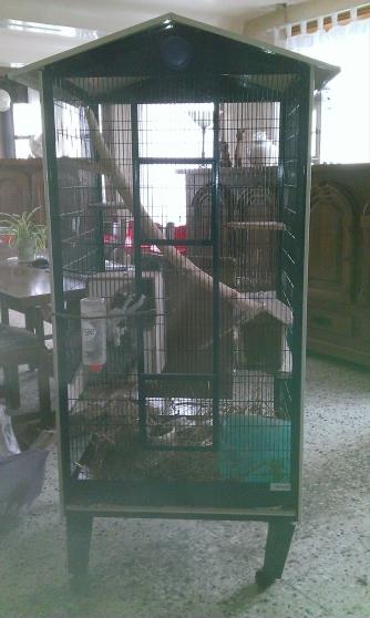 Annonce occasion, vente ou achat 'vends 3 males chinchilla gris avec cage'