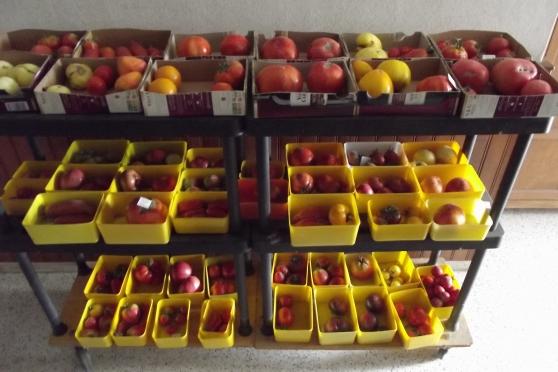 graines tomates anciennes ,autre graines