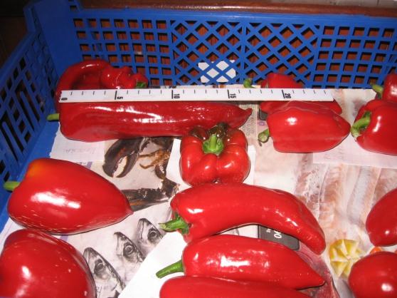graines tomates anciennes ,autre graines - Photo 3