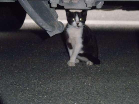 petite chatte cherche accueil