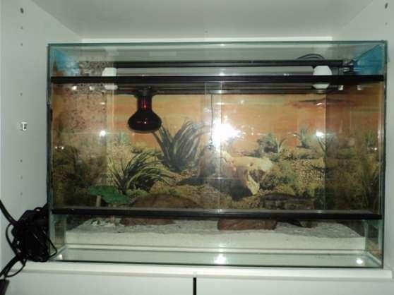 Vends Gecko Léopard mâle + Terrarium