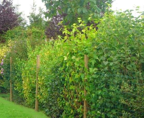 kit haie fleurie n 2 26 arbustes jardin nature jardinage coulommiers reference jar jar. Black Bedroom Furniture Sets. Home Design Ideas