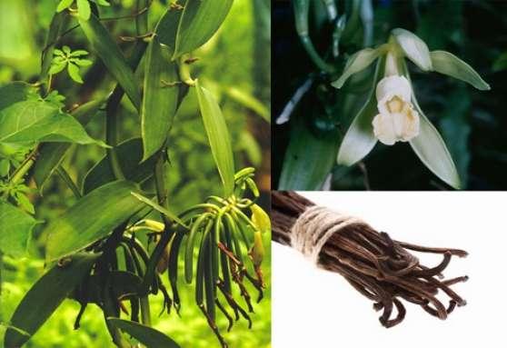 Vanille en gousse de Madagascar 250gr