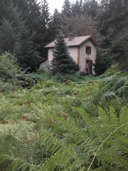 Rare maison isolée en pleine forêt