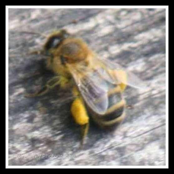 Apiculture materiel abeille livre etc