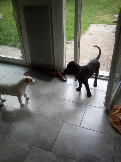 Annonce occasion, vente ou achat 'Garde d\'animaux : chiens, chat etc'