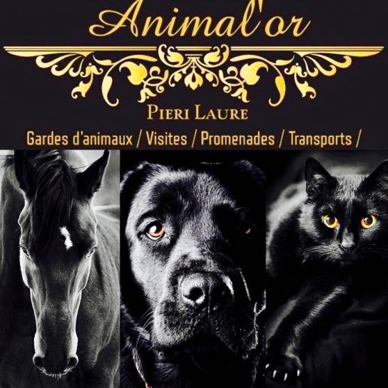 Annonce occasion, vente ou achat 'Propose garde et services pour animaux'