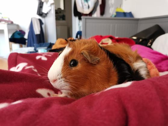 Don de cochon dinde - Photo 3