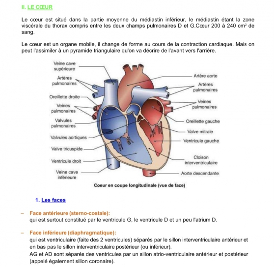 Vente cours anatomie PACES STRASBOURG