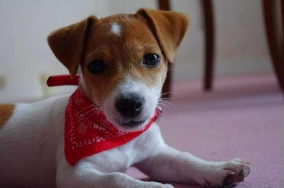 collier bandana pour chien animaux accessoires pour animaux lannion reference ani acc col. Black Bedroom Furniture Sets. Home Design Ideas