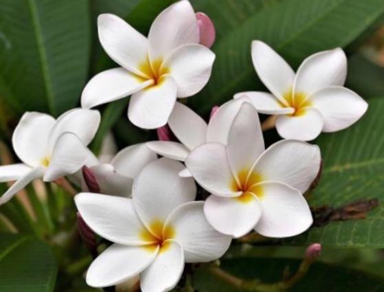 Annonce occasion, vente ou achat 'Massage traditionnel Malgache'