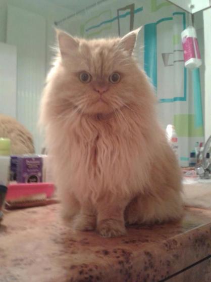 Annonce occasion, vente ou achat 'Je m\'occupe de votre chat chez vous'