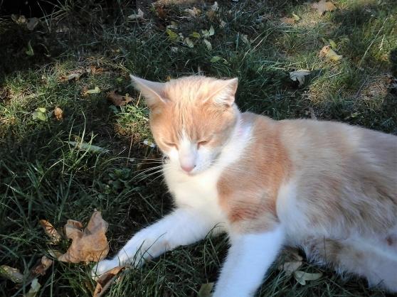 visite chat a domicile - Annonce gratuite marche.fr