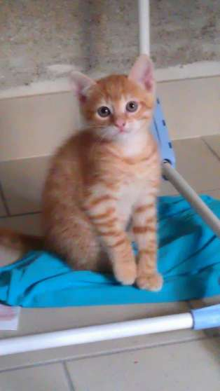 Chatons A Donner Marche Fr