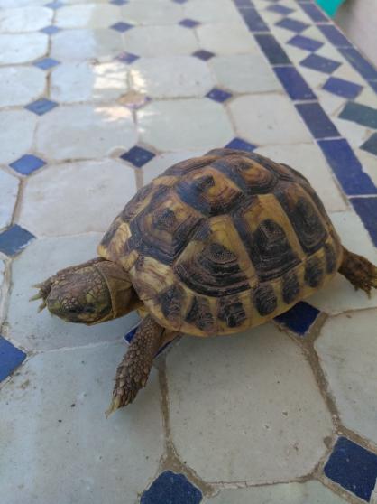 Annonce occasion, vente ou achat 'tortue de jardin'