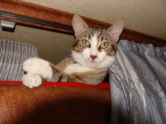 Annonce occasion, vente ou achat 'perdu chat tigré gris et blanc yeux vert'