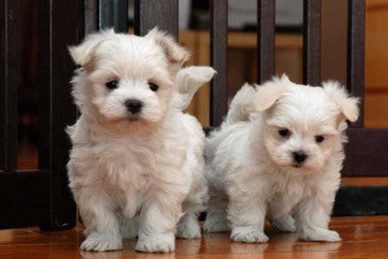 recherche plan cue rencontre chiot et chien adulte