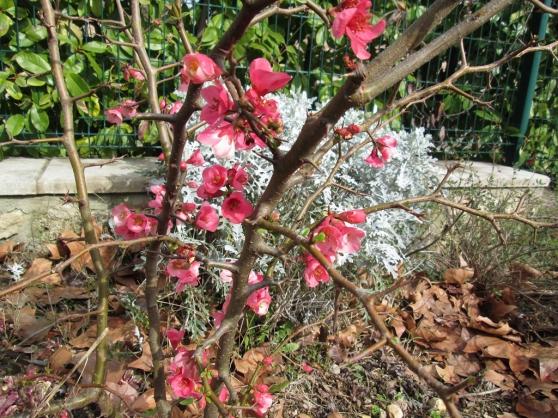Annonce occasion, vente ou achat '9 ateliers Forêt-jardin'