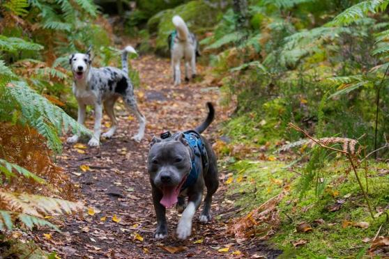 promenade de chien - professionnelle - Annonce gratuite marche.fr