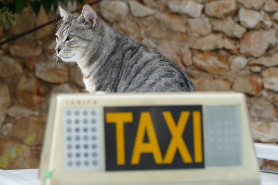 Annonce occasion, vente ou achat 'Taxi animalier - Professionnelle'