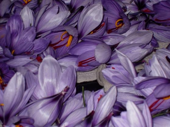 Annonce occasion, vente ou achat 'safran de haute provence'