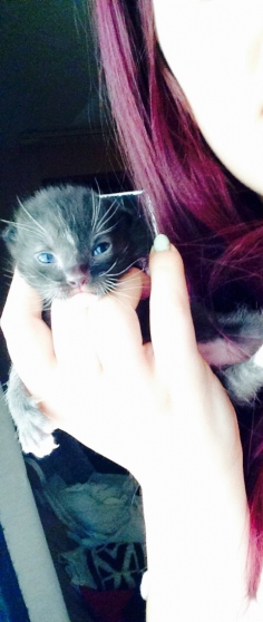 Annonce occasion, vente ou achat 'Donne chatons !'