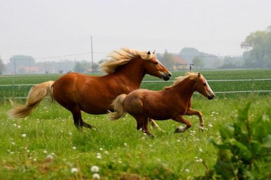 Annonce occasion, vente ou achat 'pension pour cheval / poney / poulain'