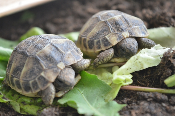Annonce occasion, vente ou achat 'BB tortues HH'