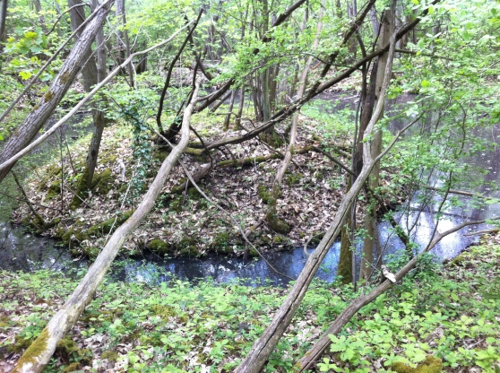 Forêt dans le parc naturel régional