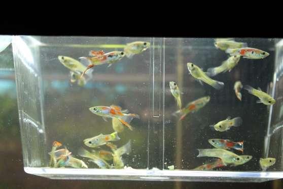 Recherchez vente ou occasion animaux annonce gratuite for Vente poisson aquarium particulier