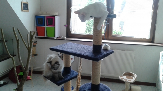 Pension familiale pour chats
