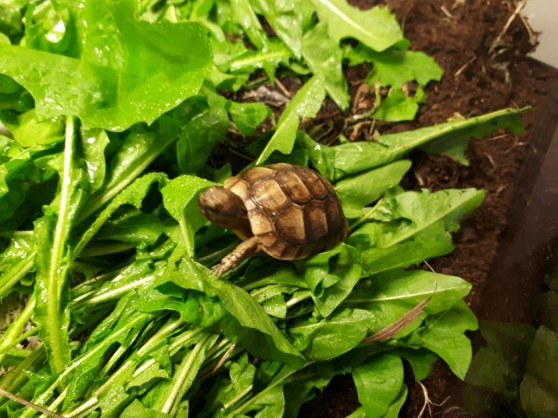vends tortue - Annonce gratuite marche.fr